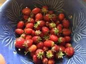berries_6_15_15