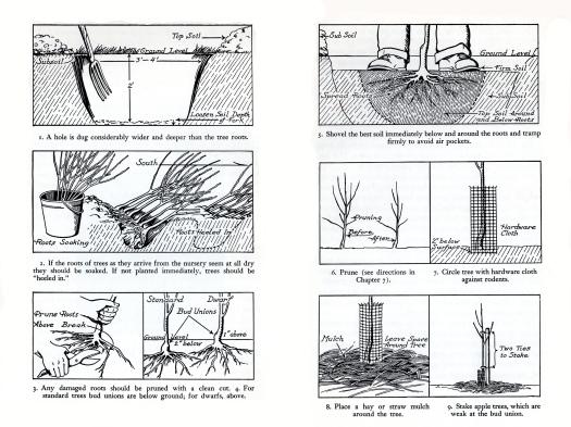 Planting a tree022
